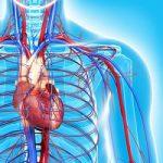 healthy_heart_start_250X250